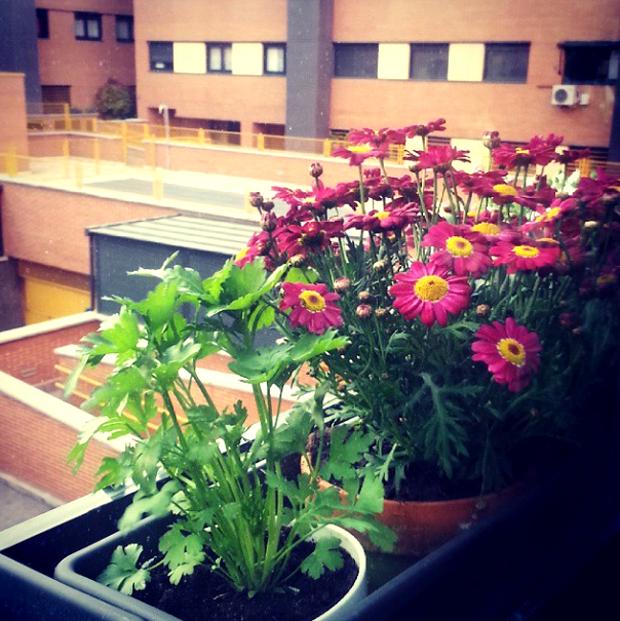flores huerto urbano
