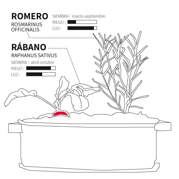 huerto_urbano_romero_rabano