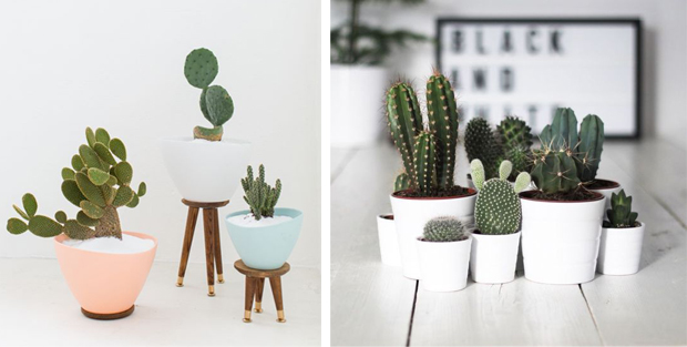 cactus_planta