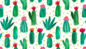 cactus_portada