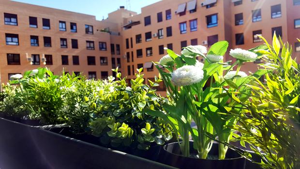 plantas_plastico3