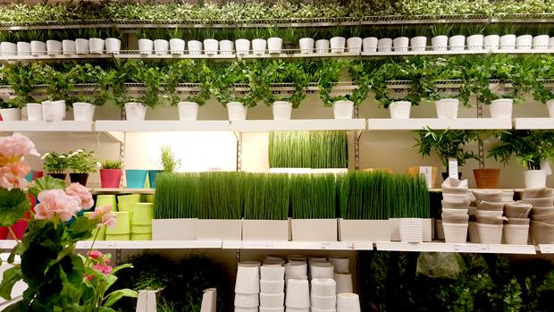 plantas_plastico5