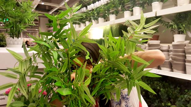 plantas_plastico6