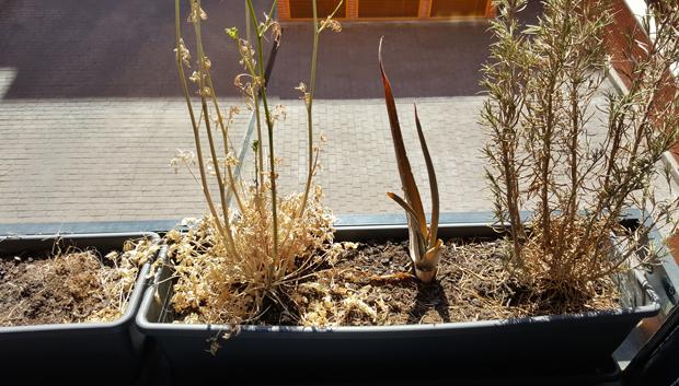 plantas_plastico7